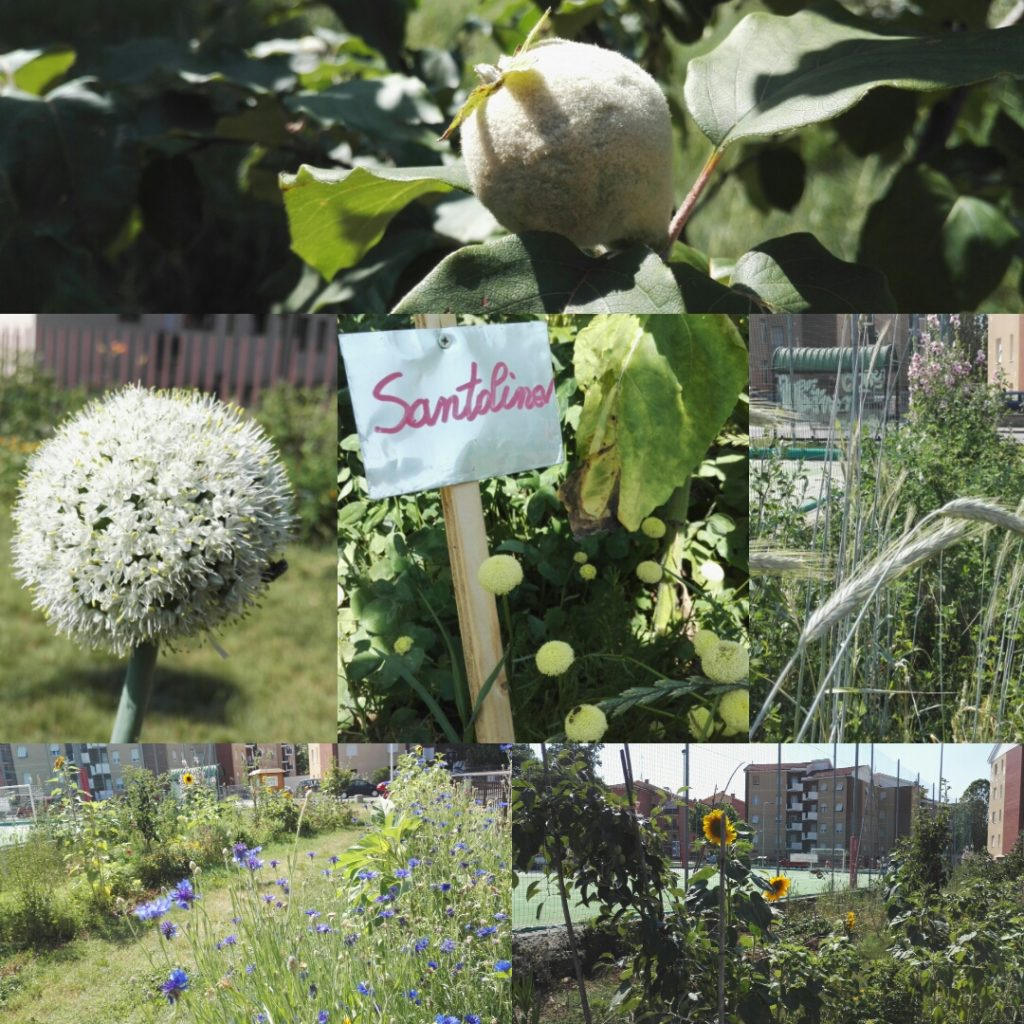 Semi di Quartiere | Giardino Foresta